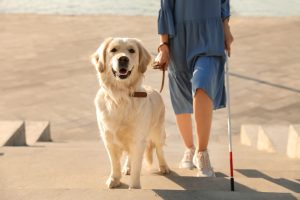 https://celebratingabilities.org.au/blind-guide-dogs-welcome-all-abilities